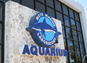 A Different Kind of Aquarium – Mote Marine in Sarasota, Florida