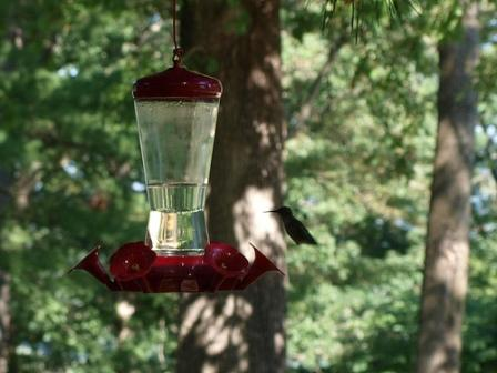 Pikes Peak State Park Hummingbirds