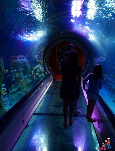 Ocean Tunnel at SeaLife Aquarium