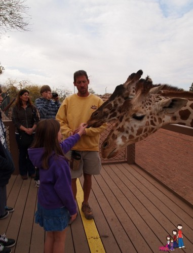 Feeding Giraffe at the Phoenix Zoo