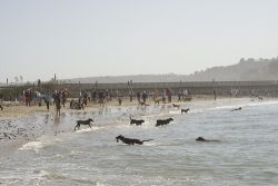 Dog Beach in San Diego