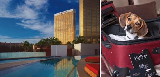 Pet-friendly hotel - THEHotel at Mandalay Bay, Las Vegas