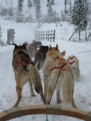 Chena Hot Springs Dog Sled Ride