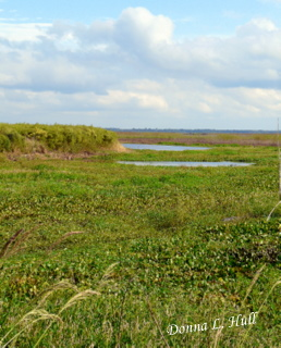 florida-micanopy-paynes-prairie-preserve