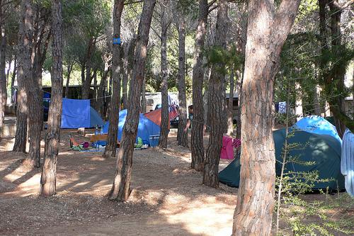 Camping in pine woods at Camping Cala Gonone, Sardinia