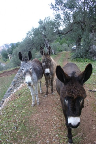 See Mallorca from a local's perspective - Hotel La Residencia Tour Guides Pancho, Alba and Lluna
