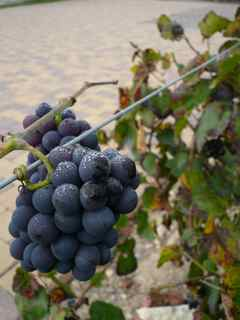 Visit Mas Ardevol and the Pirorat Wine Country