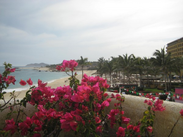 Bogenvelia, Secrets Marquis Lis Cabos, Mexico, view, Nancy D. Brown